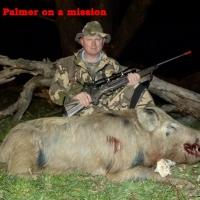 Palmer 3
